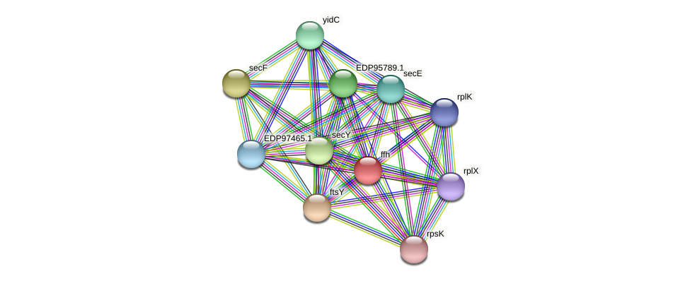 ffh protein (Kordia algicida) - STRING interaction network