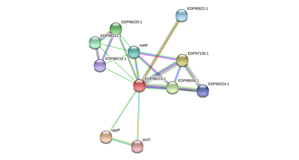 KAOT1_13417 protein (Kordia algicida) - STRING interaction network
