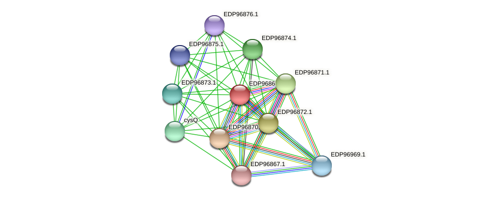 KAOT1_16938 protein (Kordia algicida) - STRING interaction network