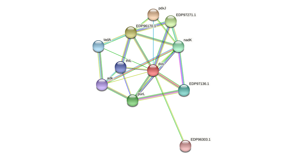 dxs protein (Kordia algicida) - STRING interaction network
