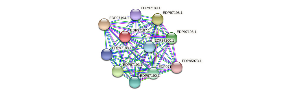 KAOT1_18582 protein (Kordia algicida) - STRING interaction network