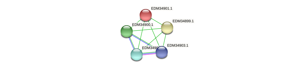 PBAL39_00175 protein (Pedobacter sp. BAL39) - STRING interaction network