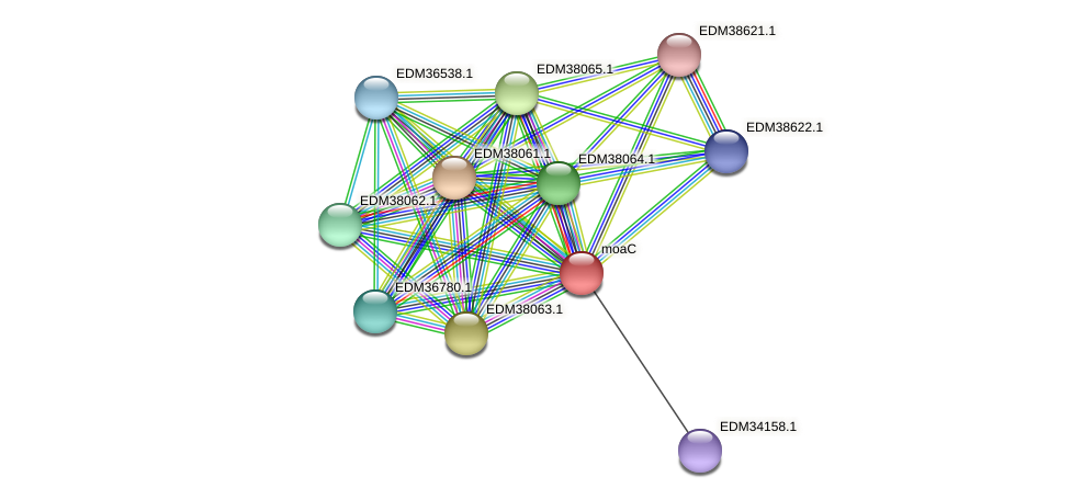 moaC protein (Pedobacter sp. BAL39) - STRING interaction network