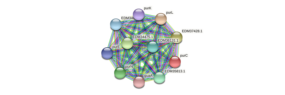 purC protein (Pedobacter sp. BAL39) - STRING interaction network