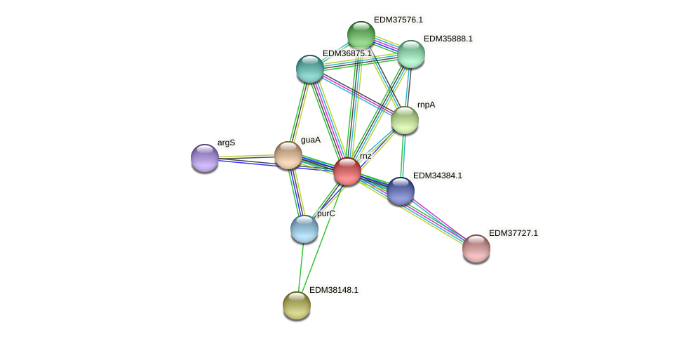 rnz protein (Pedobacter sp. BAL39) - STRING interaction network