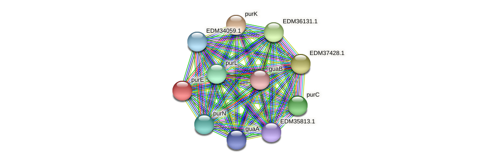 purE protein (Pedobacter sp. BAL39) - STRING interaction network