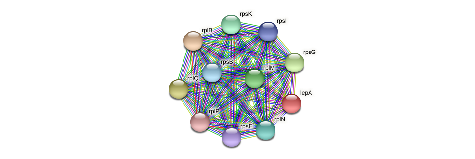 lepA protein (Pedobacter sp. BAL39) - STRING interaction network