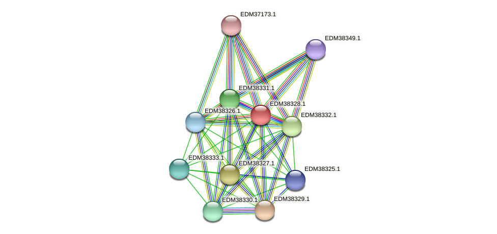 PBAL39_01897 protein (Pedobacter sp. BAL39) - STRING interaction network