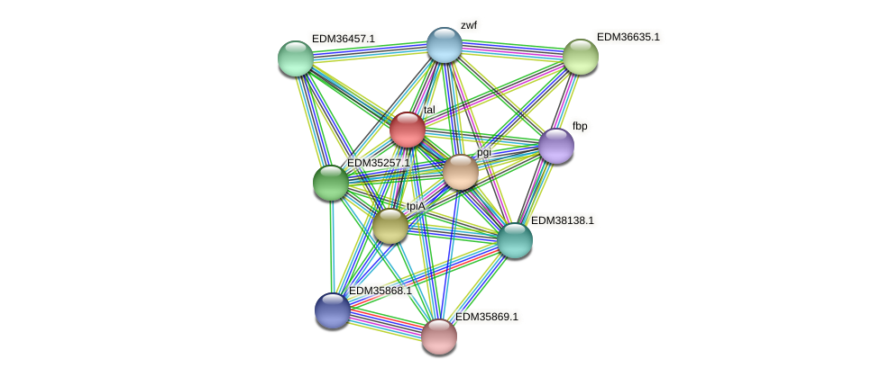 tal protein (Pedobacter sp. BAL39) - STRING interaction network