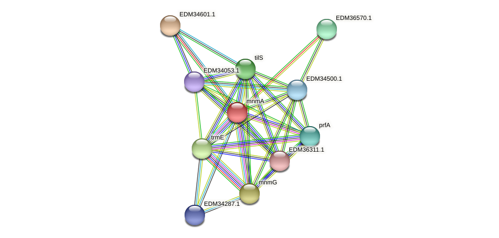 mnmA protein (Pedobacter sp. BAL39) - STRING interaction network