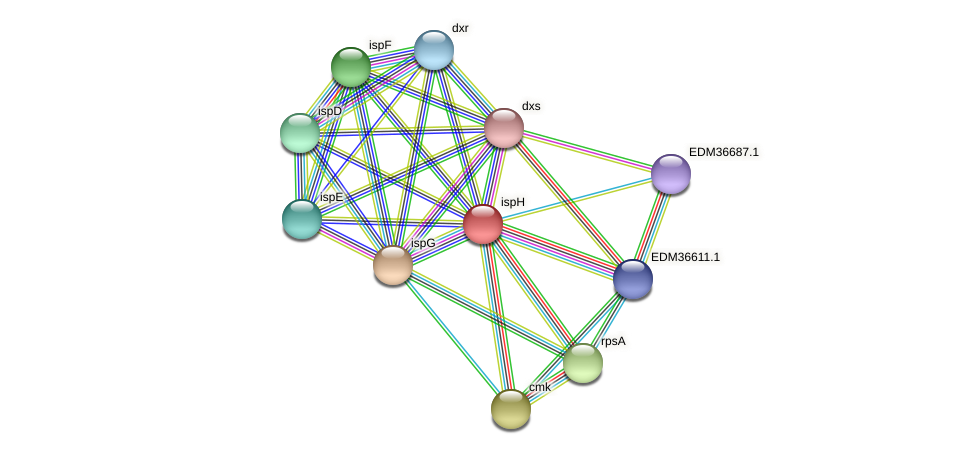 ispH protein (Pedobacter sp. BAL39) - STRING interaction network