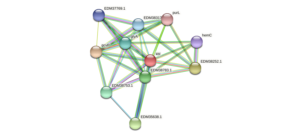 kbl protein (Pedobacter sp. BAL39) - STRING interaction network
