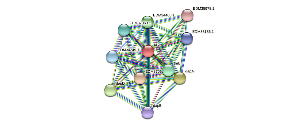 asd protein (Pedobacter sp. BAL39) - STRING interaction network