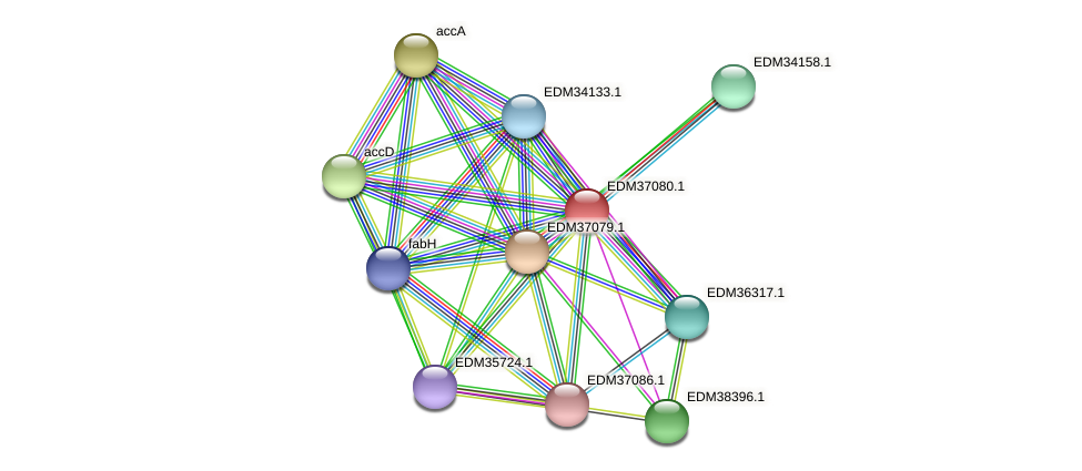 PBAL39_04758 protein (Pedobacter sp. BAL39) - STRING interaction network