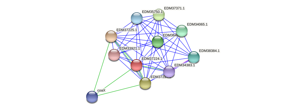 PBAL39_05478 protein (Pedobacter sp. BAL39) - STRING interaction network