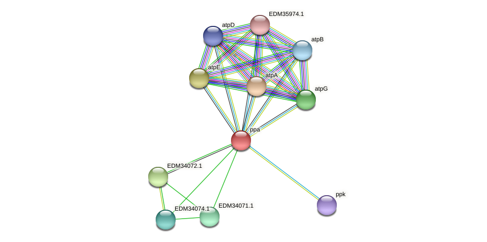 ppa protein (Pedobacter sp. BAL39) - STRING interaction network