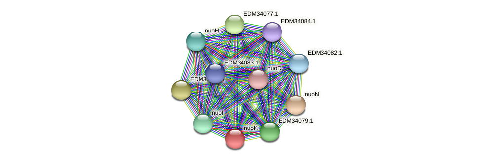 nuoK protein (Pedobacter sp. BAL39) - STRING interaction network