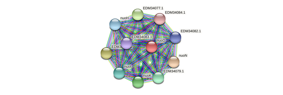 nuoD protein (Pedobacter sp. BAL39) - STRING interaction network