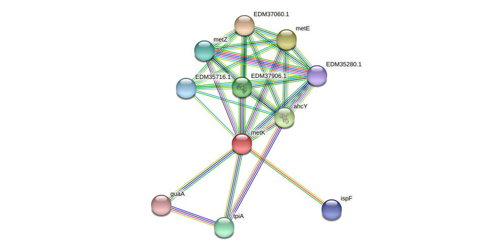 metK protein (Pedobacter sp. BAL39) - STRING interaction network
