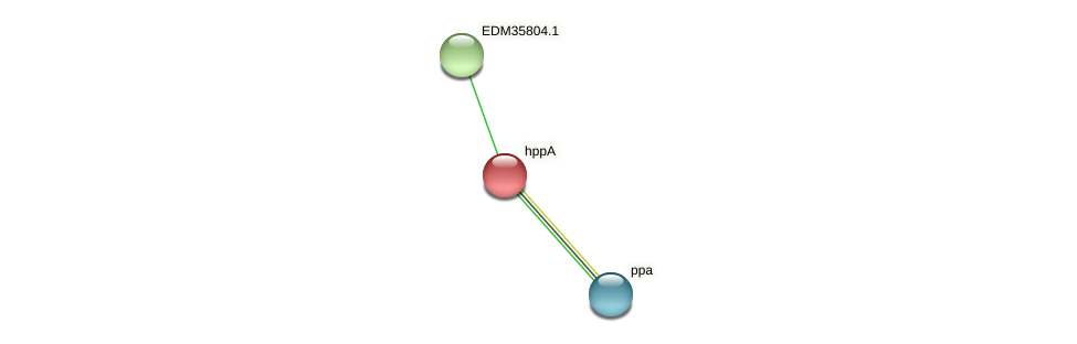 hppA protein (Pedobacter sp. BAL39) - STRING interaction network