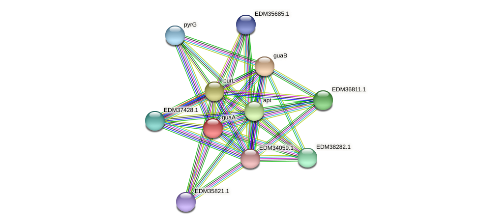 guaA protein (Pedobacter sp. BAL39) - STRING interaction network