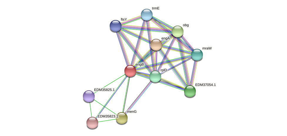 engB protein (Pedobacter sp. BAL39) - STRING interaction network