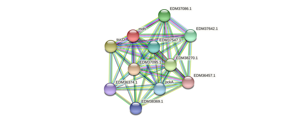 mdh protein (Pedobacter sp. BAL39) - STRING interaction network