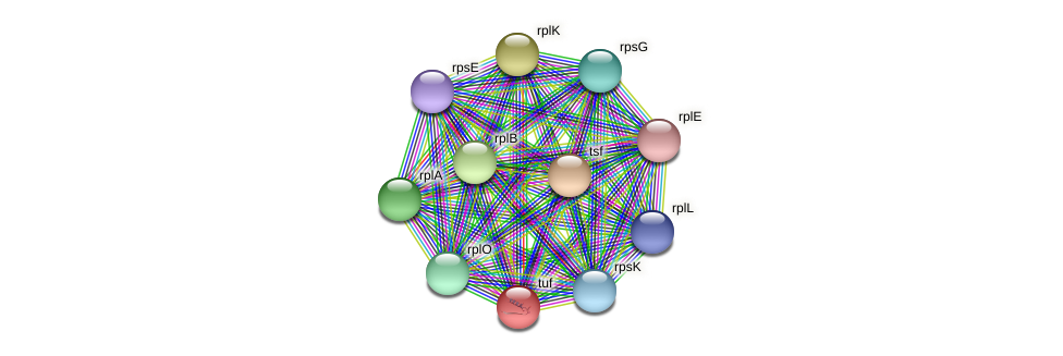 tuf protein (Pedobacter sp. BAL39) - STRING interaction network