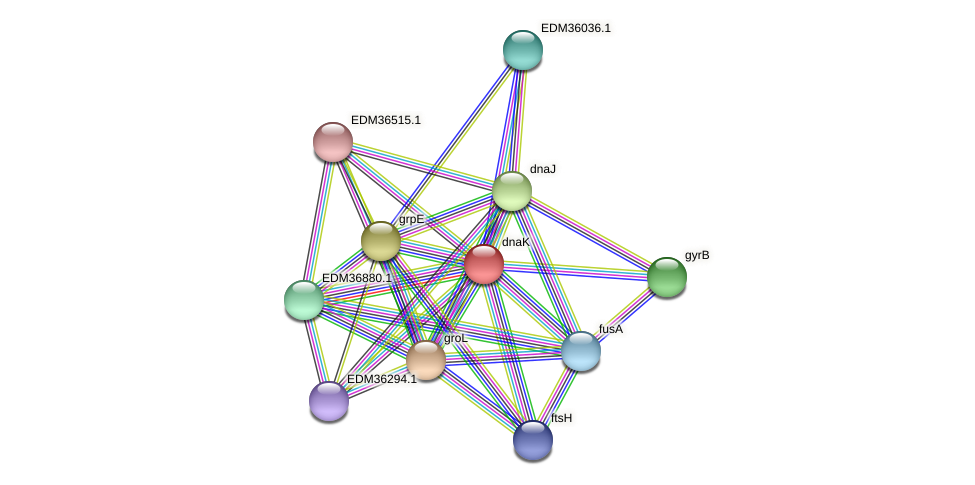 dnaK protein (Pedobacter sp. BAL39) - STRING interaction network