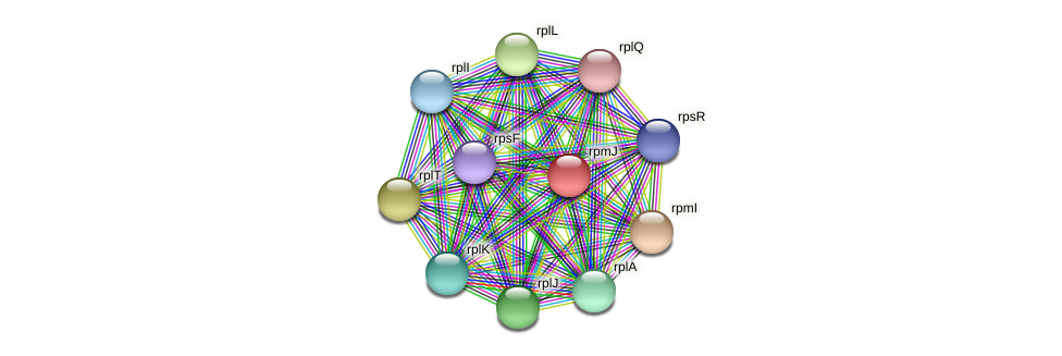 rpmJ protein (Pedobacter sp. BAL39) - STRING interaction network