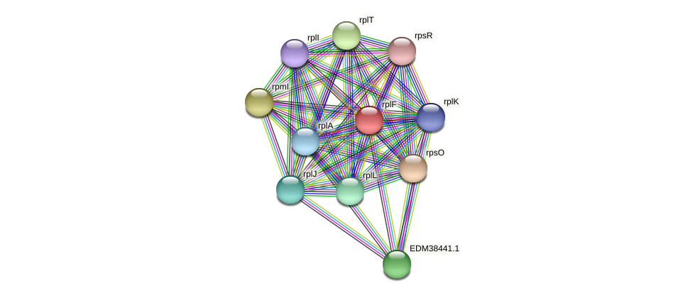 rplF protein (Pedobacter sp. BAL39) - STRING interaction network