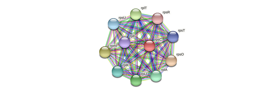 rpsC protein (Pedobacter sp. BAL39) - STRING interaction network