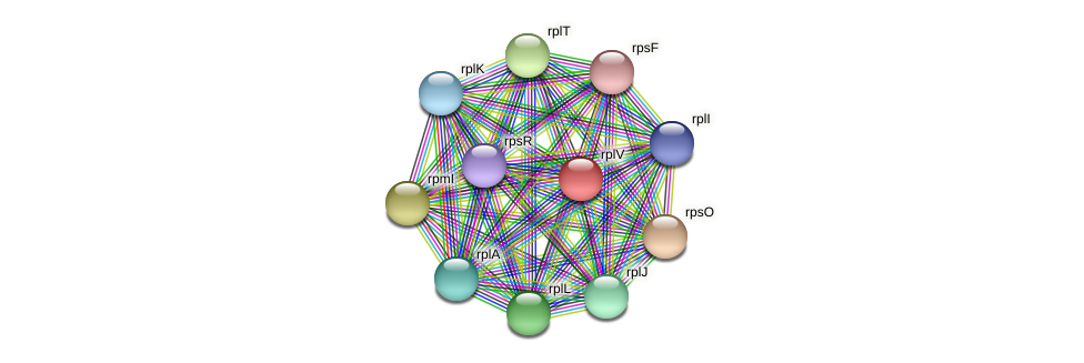 rplV protein (Pedobacter sp. BAL39) - STRING interaction network