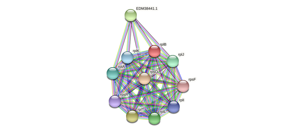 rplB protein (Pedobacter sp. BAL39) - STRING interaction network