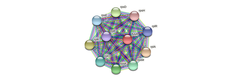 fusA protein (Pedobacter sp. BAL39) - STRING interaction network