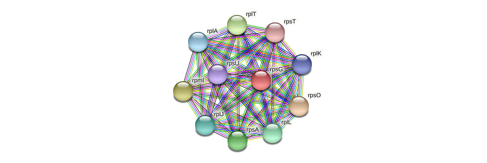 rpsG protein (Pedobacter sp. BAL39) - STRING interaction network