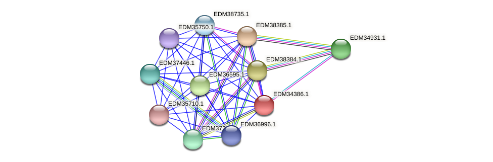 PBAL39_08866 protein (Pedobacter sp. BAL39) - STRING interaction network