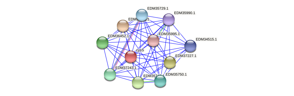 PBAL39_08886 protein (Pedobacter sp. BAL39) - STRING interaction network