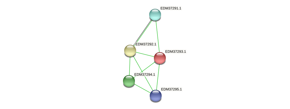 PBAL39_09126 protein (Pedobacter sp. BAL39) - STRING interaction network