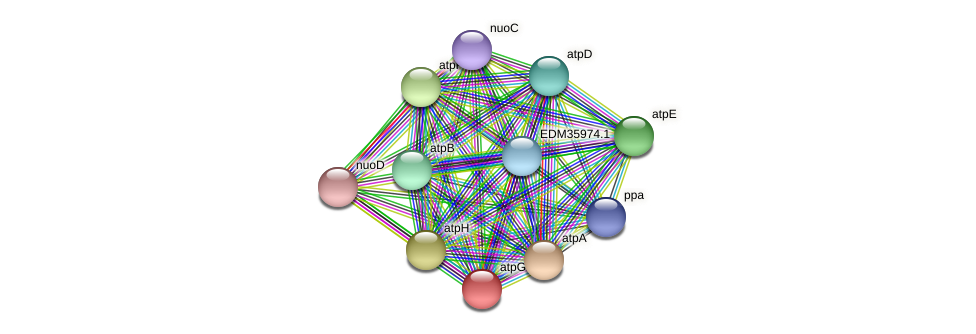 atpG protein (Pedobacter sp. BAL39) - STRING interaction network