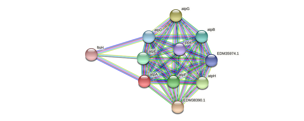 atpA protein (Pedobacter sp. BAL39) - STRING interaction network