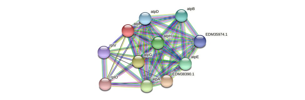 atpF protein (Pedobacter sp. BAL39) - STRING interaction network