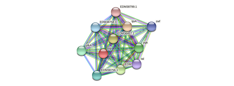 pgi protein (Pedobacter sp. BAL39) - STRING interaction network