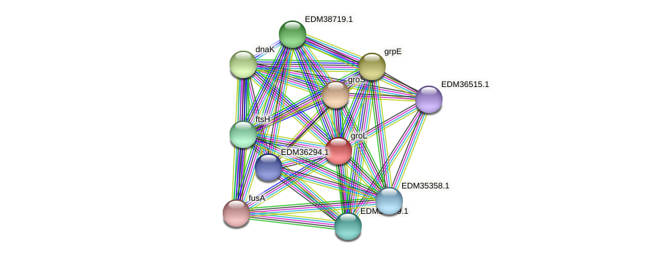 groL protein (Pedobacter sp. BAL39) - STRING interaction network