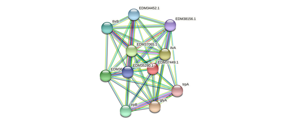 PBAL39_09906 protein (Pedobacter sp. BAL39) - STRING interaction network