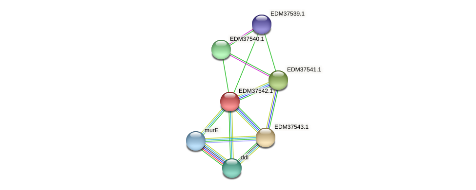 PBAL39_10371 protein (Pedobacter sp. BAL39) - STRING interaction network