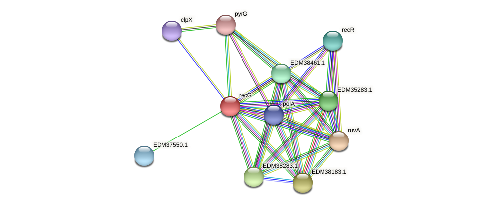 recG protein (Pedobacter sp. BAL39) - STRING interaction network