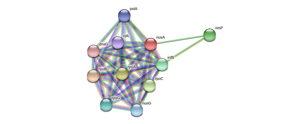nusA protein (Pedobacter sp. BAL39) - STRING interaction network