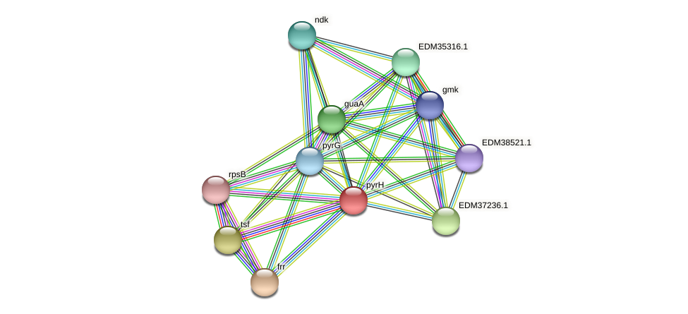 PBAL39_10626 protein (Pedobacter sp. BAL39) - STRING interaction network