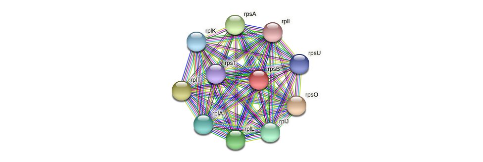rpsB protein (Pedobacter sp. BAL39) - STRING interaction network